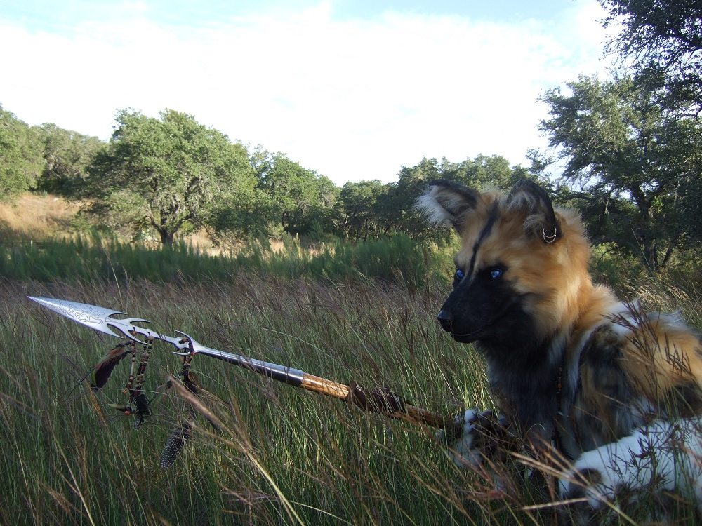 Wild Dog in the Tall Grass