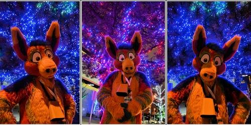 Sherbert Under the Lights
