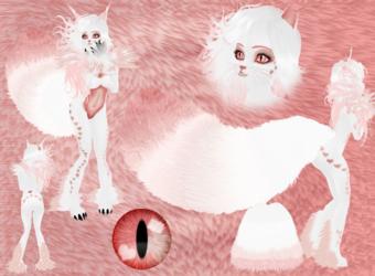 Sweetheart Seva Kitty