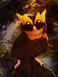Noctis the Hoothoot