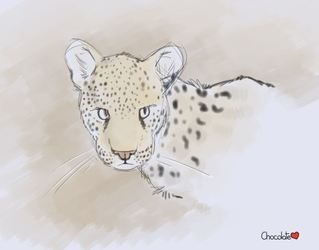Cheetah Doodle