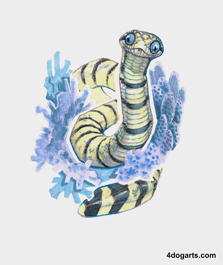 Most recent image: Coral Sea Snake
