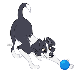 Poochember DAY 1 - Border Collie