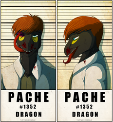 Police Line Up - Pache