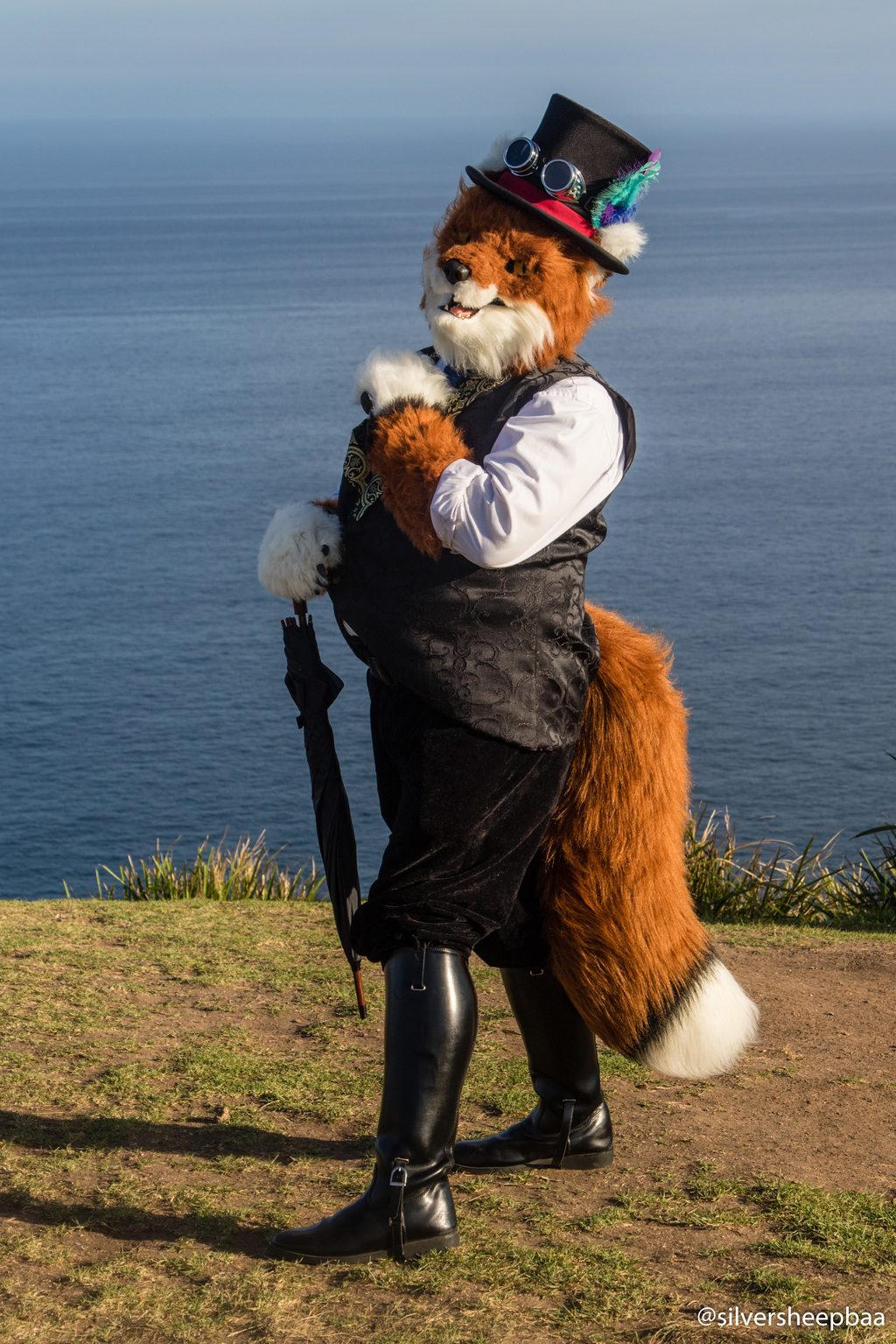 Bald Hill: A Fox with a View
