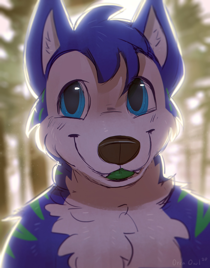 Husky Forest