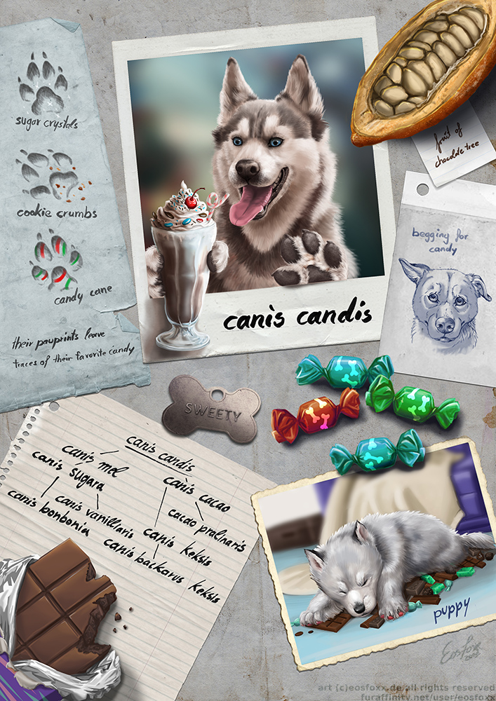 Canis Candis