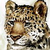 avatar of AngusAmurleopard