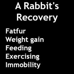 A Rabbit's Recovery