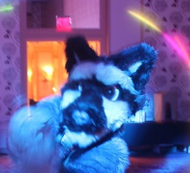 Texas Furry Fiesta 2016 - Twirling poi lights