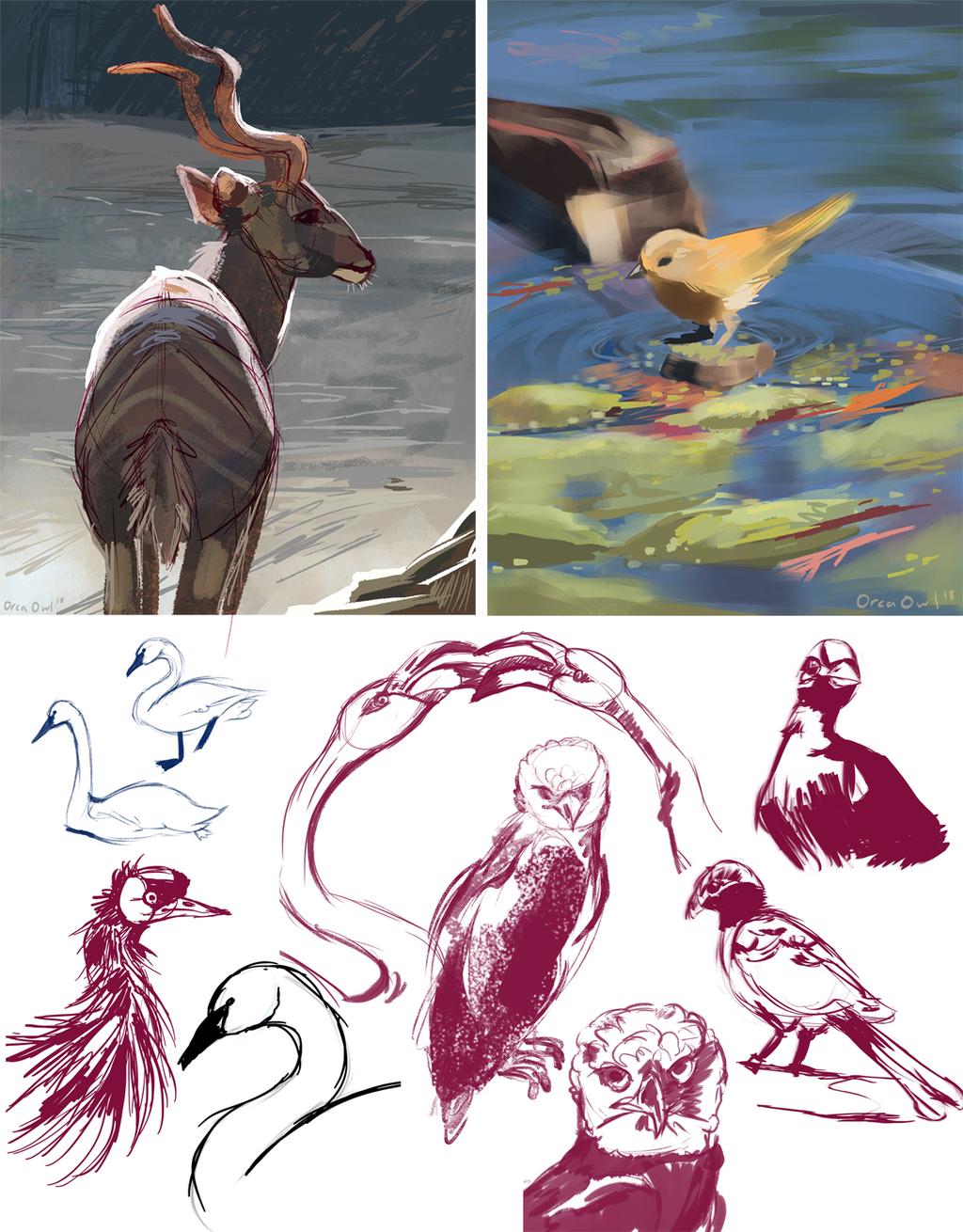 Birds + Kudu Studies