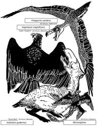 glorious extinct avians
