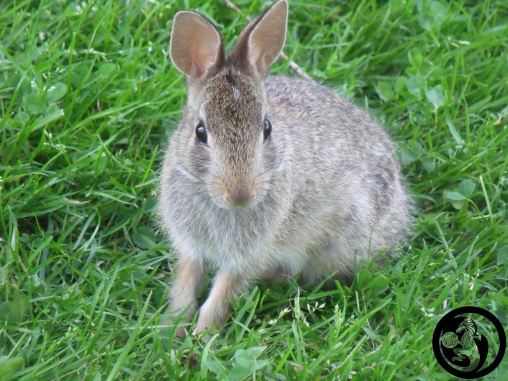 Most recent image: Little Rabbit