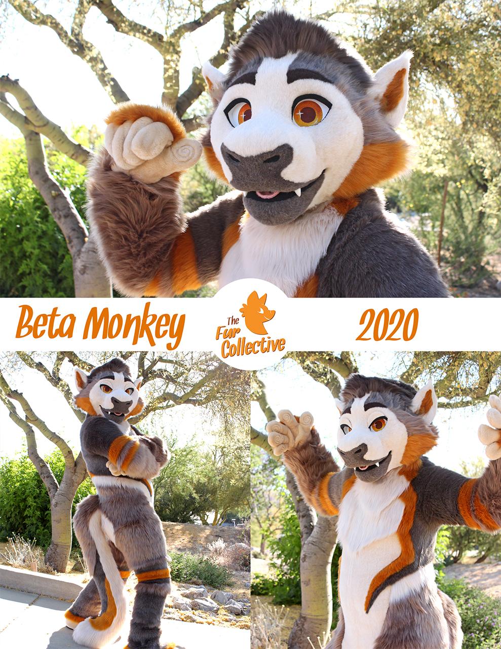 BetaMonkey the Squirrel Monkey!
