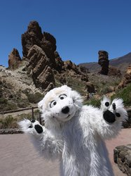 Tender Paws has gone on vacation, but where is he? pt2