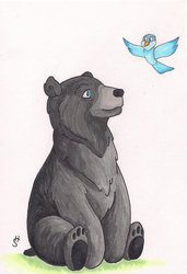 Bird to my Bear