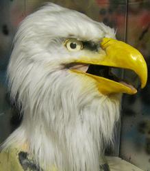 Bald eagle mask