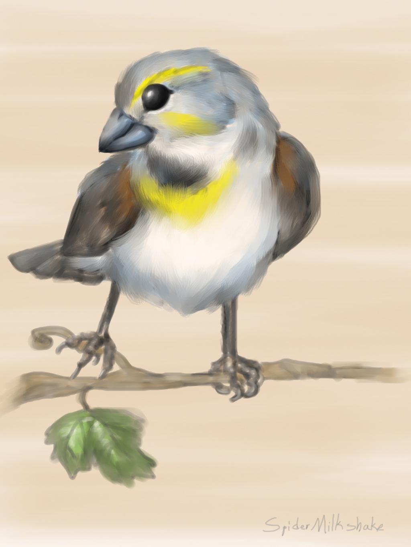 Dickcissel (Colored Sketch)