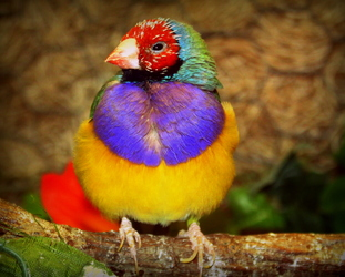 A Bird of Another Color