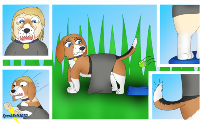 Beagle Park - Dog TF TG