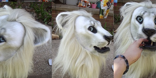 Realistic white lion head