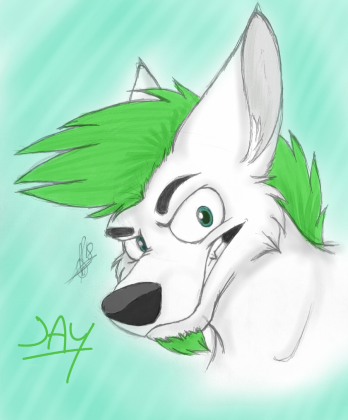 Jay wolf sketchy head