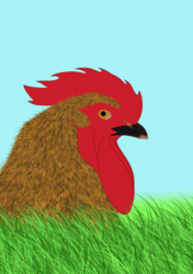 Rooster (WIP)