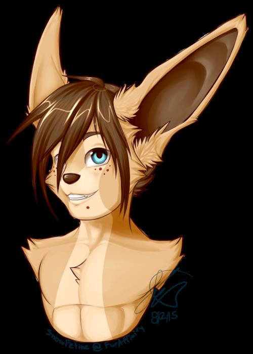 Fox bandit