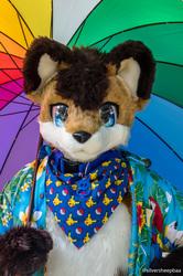 Ulladulla April 2018: Rainbow Fox