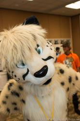 Shadow Cheetah