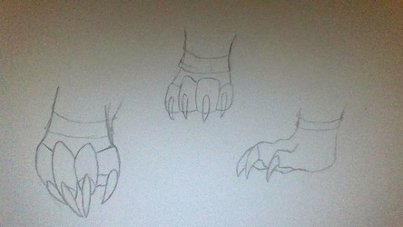 Gryphon paw sketch