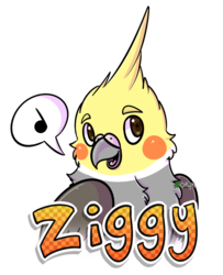 [G] - Ziggy the cockatiel