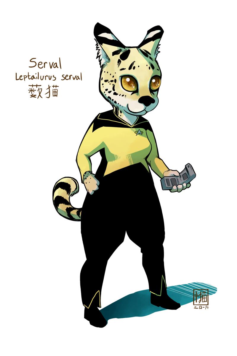 Serval engineer