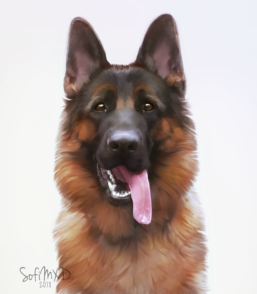 [portrait] German shepherd