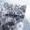 avatar of fengbar