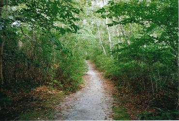 A Road Less Traveled