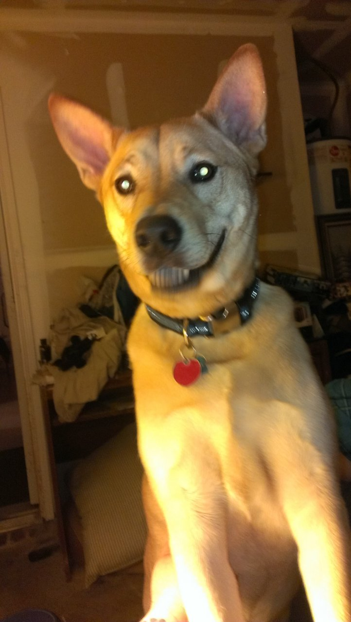 Smile.Dingo