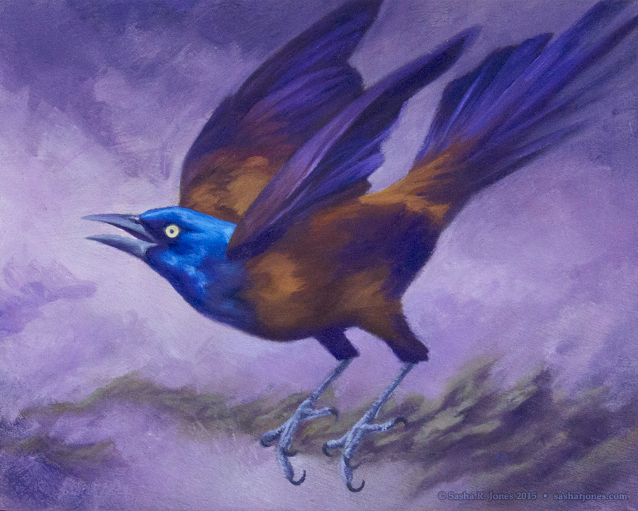 Grackle Oil Study