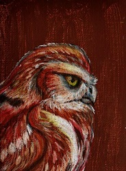 ACEO--Northern Pygmy Owl