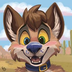 Koidel Coyote