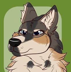 [T]Kojote
