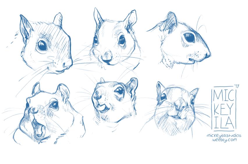 Squirrel Warm Up
