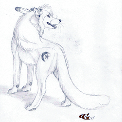 Malaika - Goldenwolf