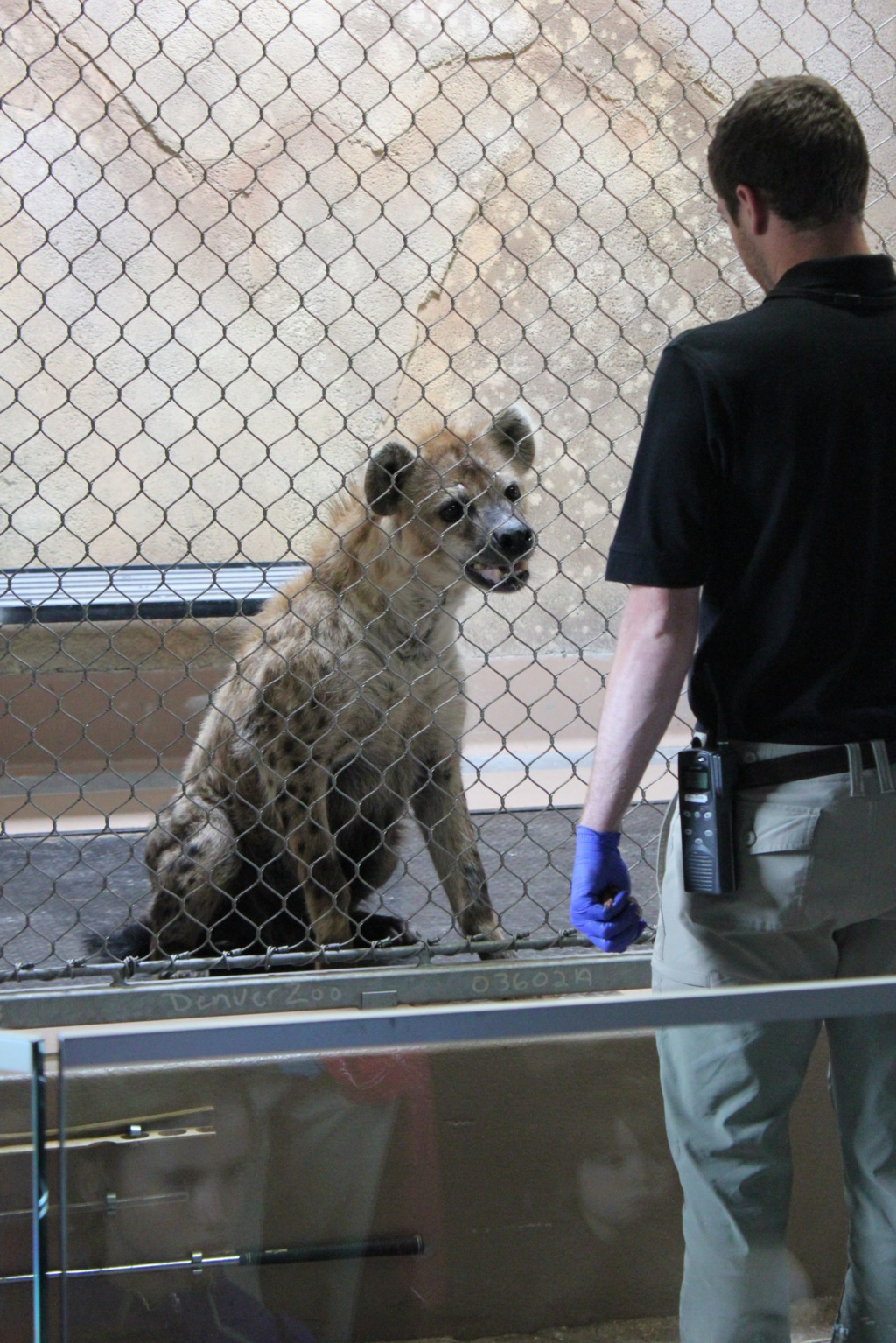 Hello, I am a hyena