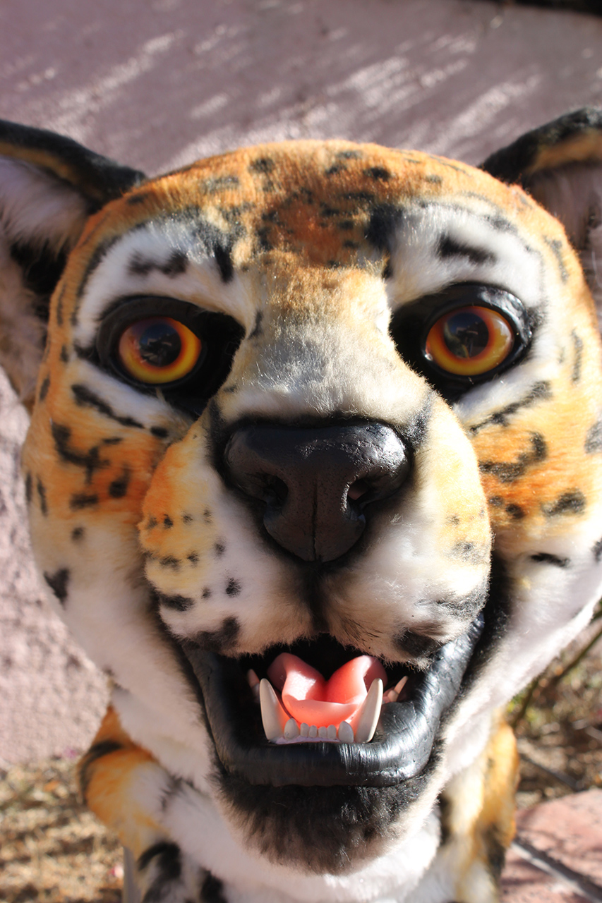 Jaguar Closeup