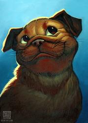 Smug Pug