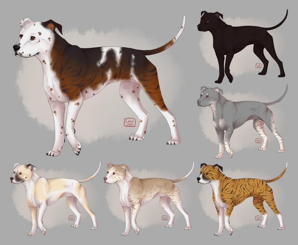 [C] American Pitbull Terrier (redux)
