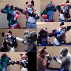 Midwest Furfest Boxing Photoshoot (set one)