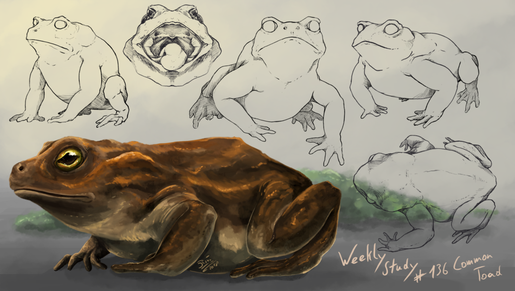 WeeklyStudies #136 Common Toad