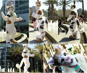 Lady Kitty full suit